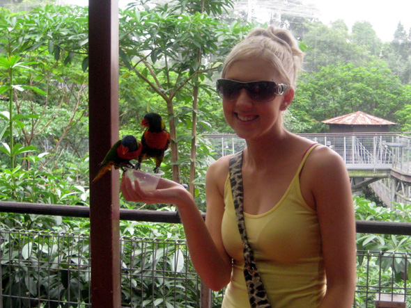 Amy at Lory Loft, feeding nectar to the lorikeets.
