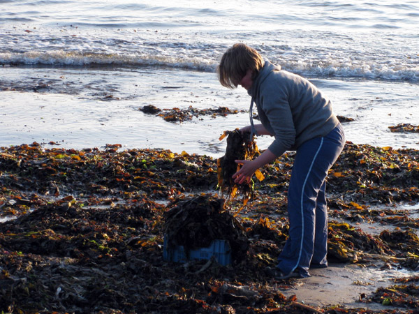 Me collecting seaweed for composting with my host in Dingle, Ireland