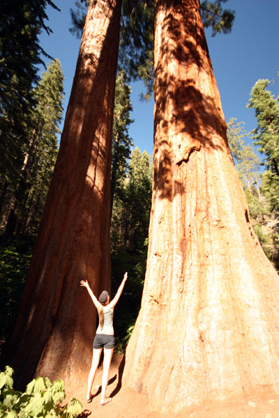Amy in the Giant Forest standing beneath two sequoia trees.