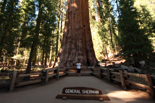 In front of the General Sherman Tree