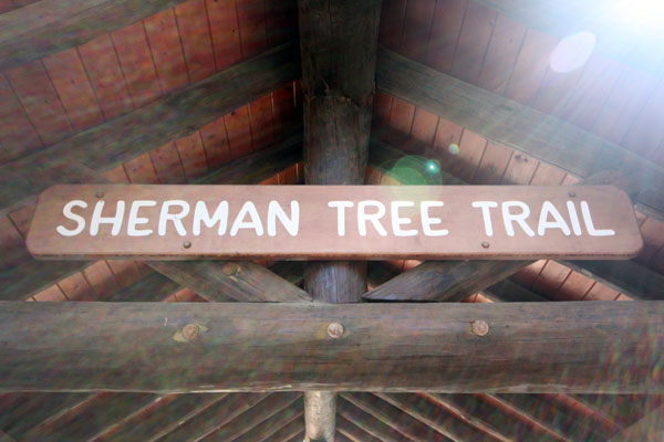 Sherman Tree Trail
