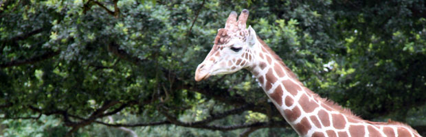 Feeding Giraffes at Woodland Park Zoo