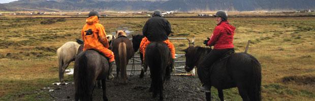 Riding The Icelandic Horses
