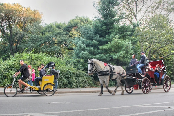 Horse and Cart Central Park