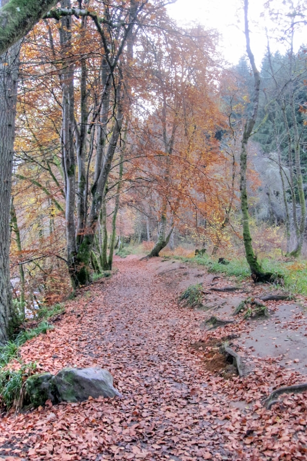 Path at The Hermitage