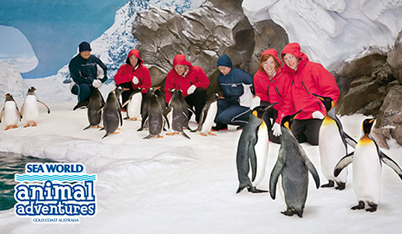 Penguin Antarctic Adventure at SeaWorld Gold Coast