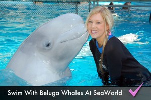 Swim and interact with a beluga whale at Sea World
