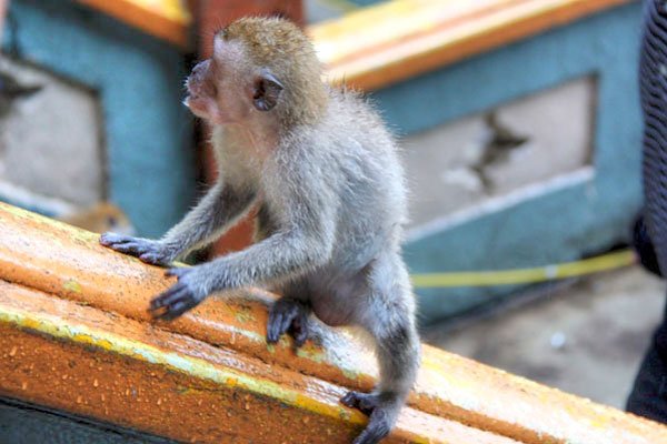 Baby Monkey at Batu Caves
