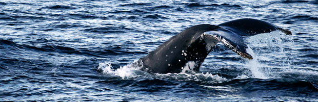 Whale Watching In The Southern Hemisphere