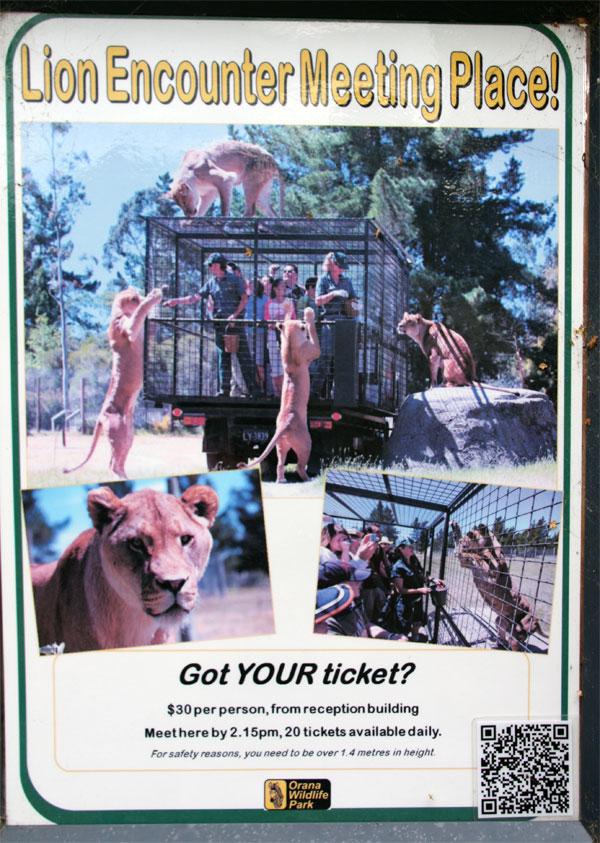 Lion Encounter Meeting Place - Orana Wildlife Park