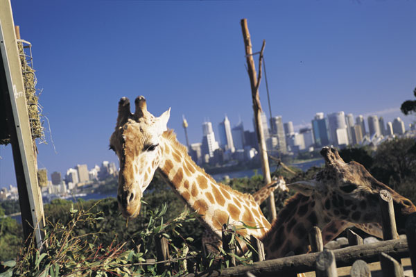 Taronga Zoo (Sally Mayman; Destination NSW)
