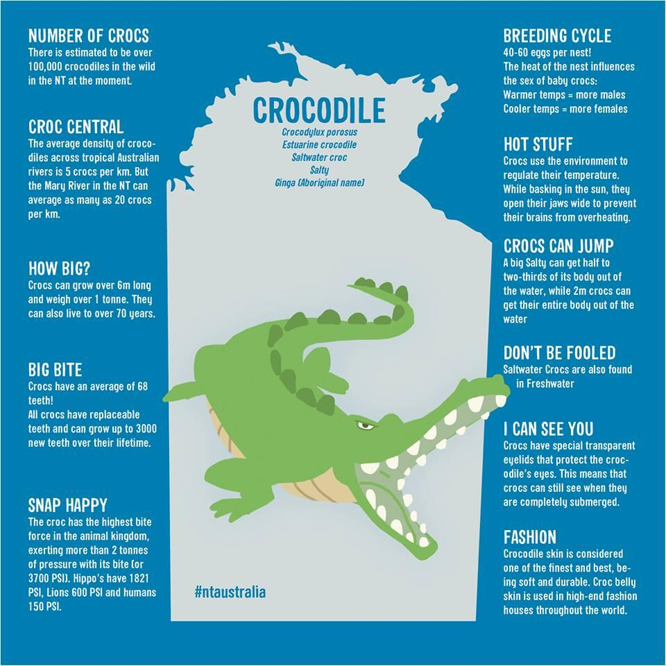 11 Crocodile Facts